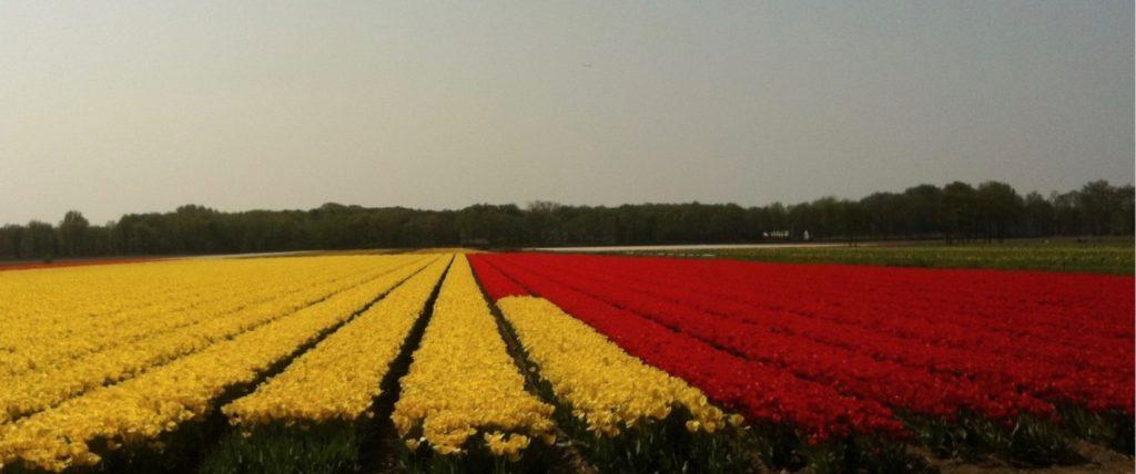 tulips, bulbs, april, keukenhof, b&b