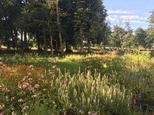 voorjaar, wilde tuin, piet oudolf